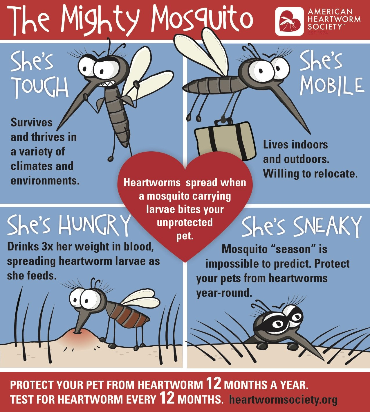 The Mighty Mosquito is here – are you ready?