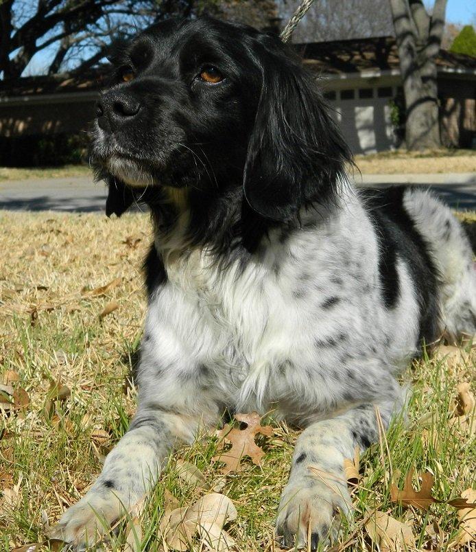 Adopt_Domino_Brittany_Rescue2
