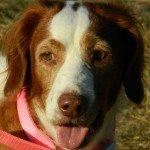 Adopt_Maddie_BRIT_1