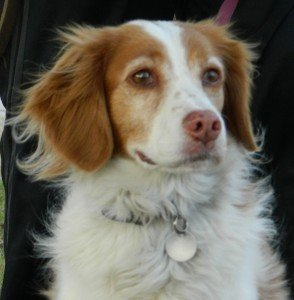 Adopt_Madi_Brittany_Rescue1