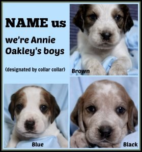 Annie O '16 - collage - naming contest of boy puppies  8-15-16