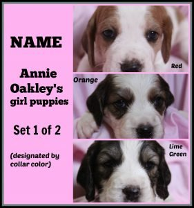 Annie O '16 - collage - naming contest of girl puppies 1 of 2  8-15-16