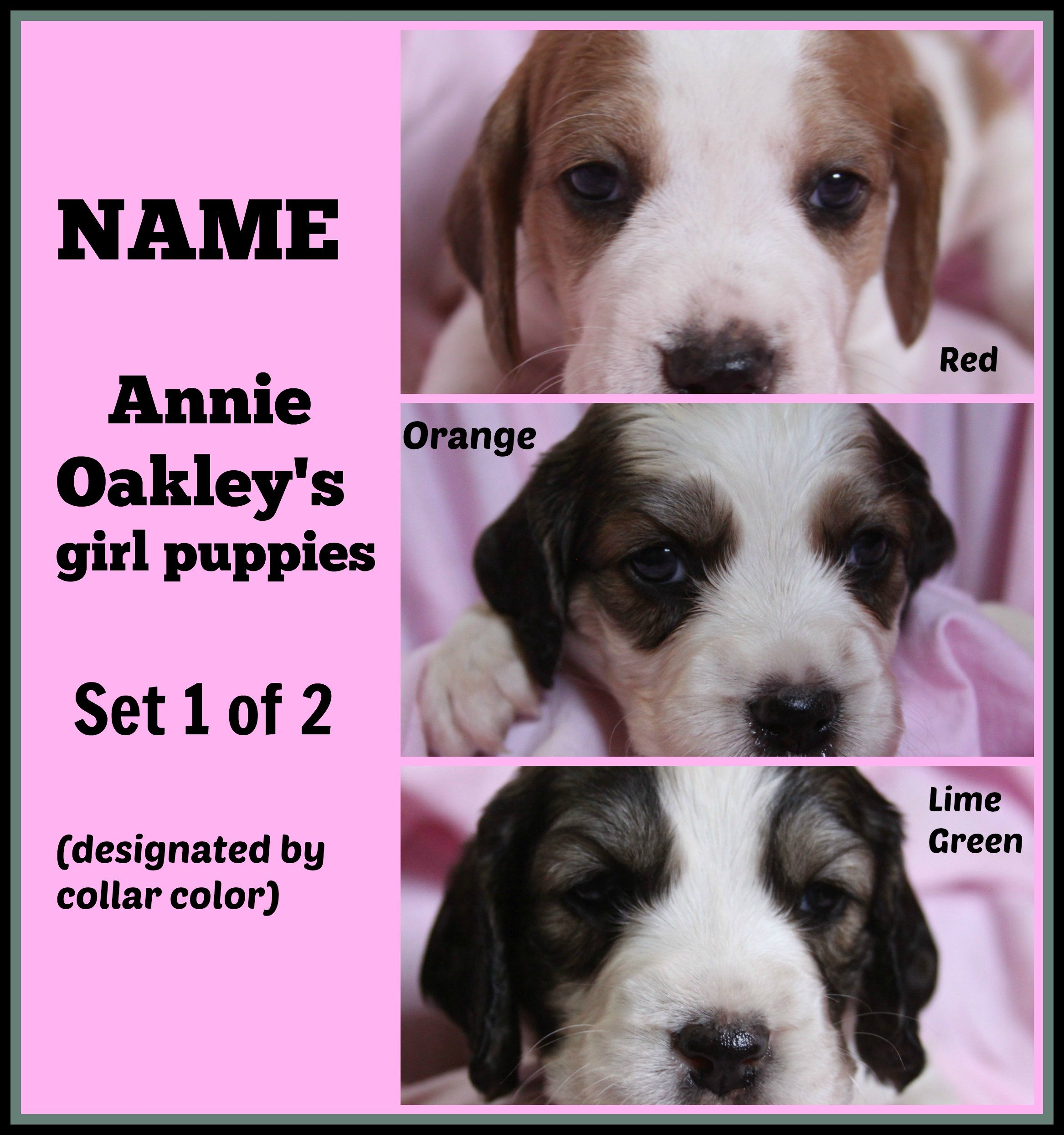 Puppy Naming Contest – Name Annie Oakley's 9 Puppies