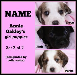Annie O '16 - collage - naming contest of girl puppies  2 of 2  8-15-16