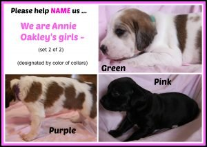 Annie O '16 - puppies - 2nd collage of girls naming contest  set 2 of 2  8-18-16