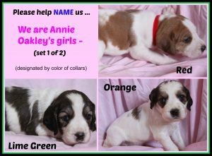 Annie O '16 - puppies - 2nd collage of puppy naming - set 1 of 2   8-18-16