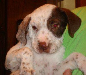 BRIT-Dog-Rescue-Anabelle-1