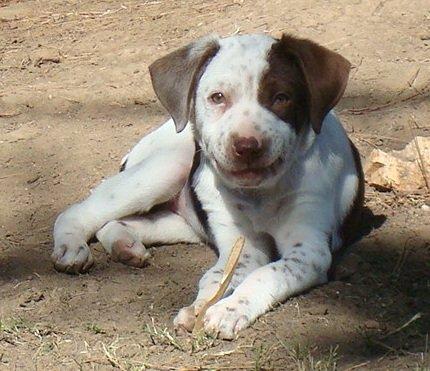 BRIT-Dog-Rescue-Anabelle-3