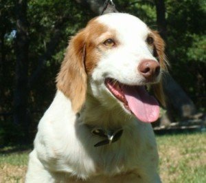 BRIT-Rescue-Dog-Charo-1
