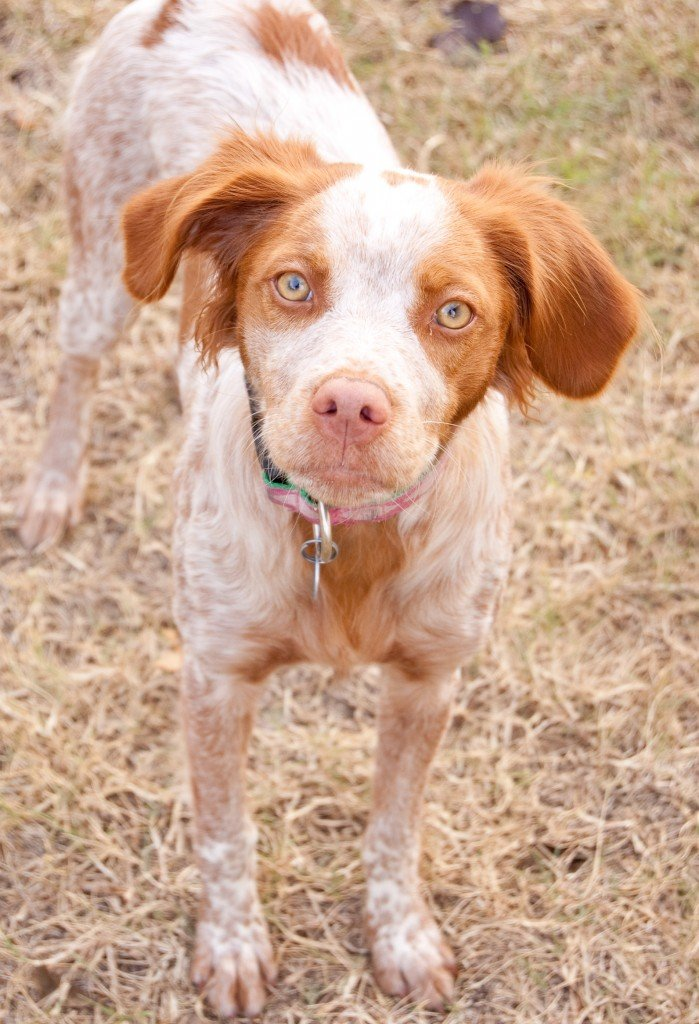 BRIT-Rescue-Texas-Rikki-4