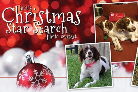 BRIT's Christmas Star Search Photo Contest