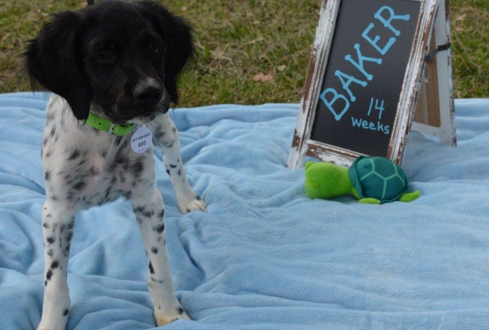 Baker (Puppy)