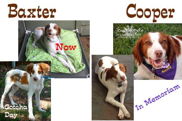 Baxter_Cooper