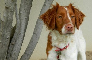 BRIT_Rescue_Dog_Bella_5