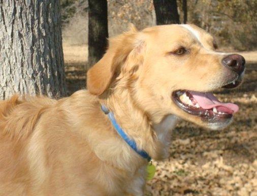 Brittany-Dog-Rescue-Maximus-3