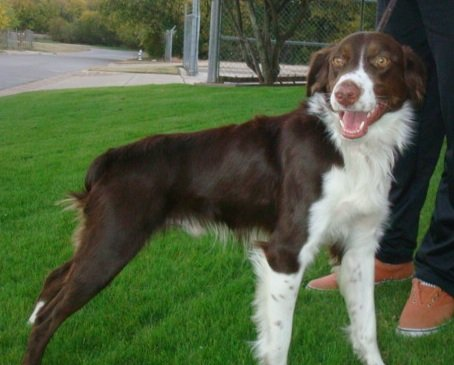 Brittany-Rescue-Chip-2