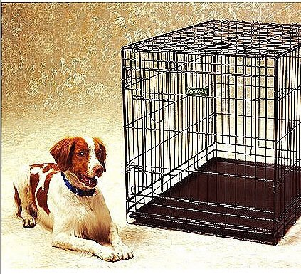 Tips for Crate Training your Rescue Brittany