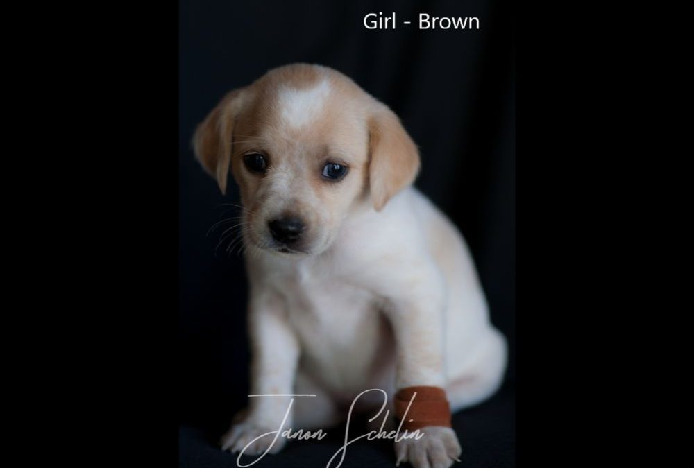 Puppy, Girl, Brown collar