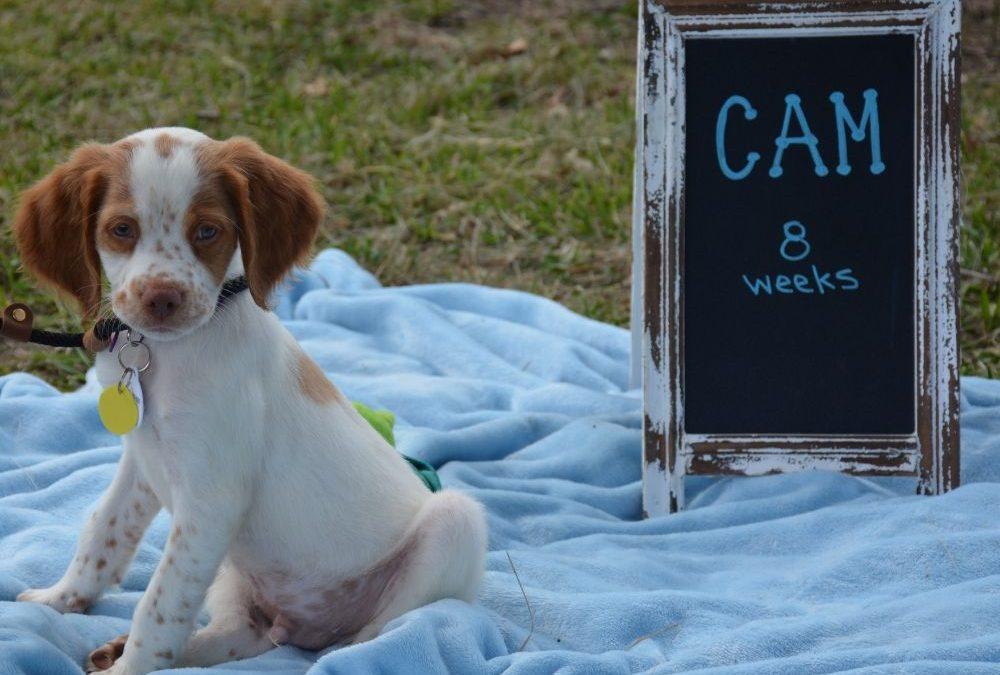 Cam (Puppy)