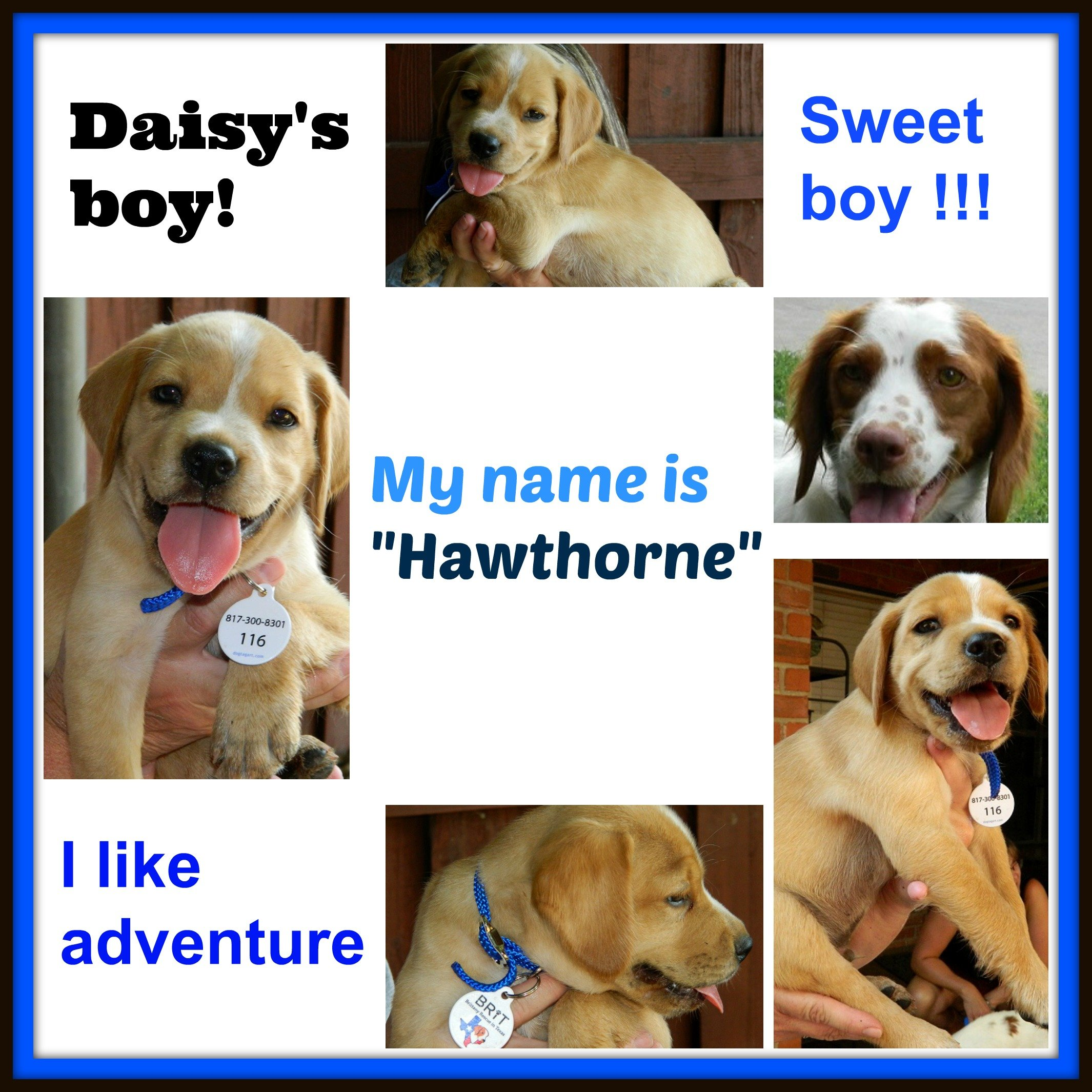 DAISY '14 - website puppy - Hawthorne 7-13-14