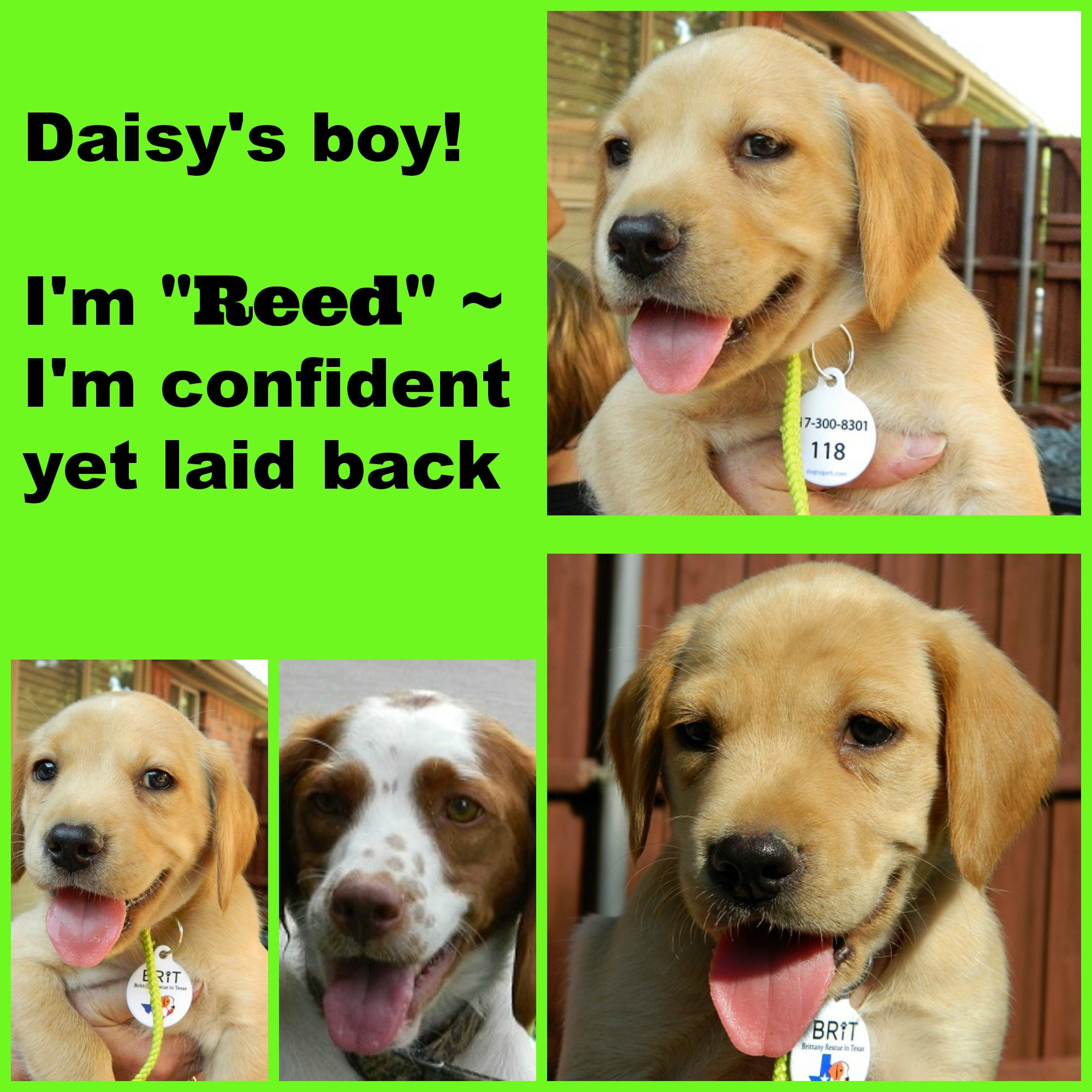DAISY '14 - website puppy - Reed  7-13-14