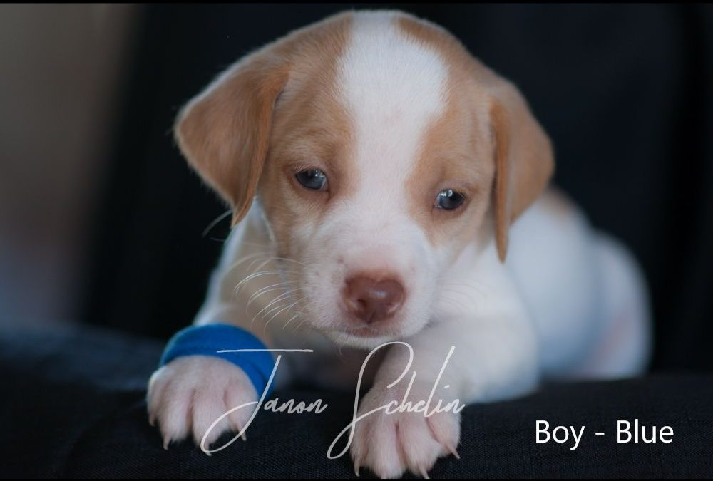 Puppy, Boy, Dark Blue collar
