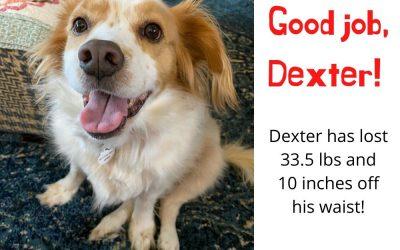 Dexter's Weight Loss Journey