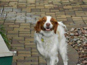 Dog_Rescue_Peggy_1