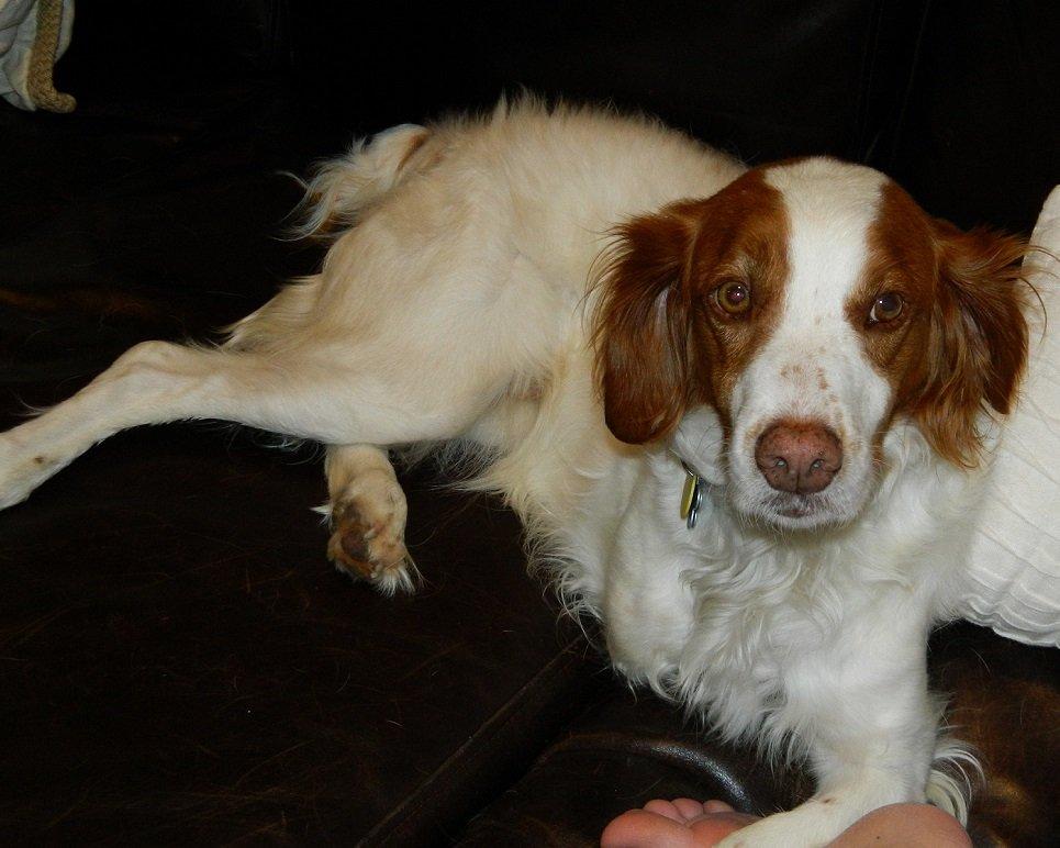 Dog_Rescue_Peggy_2