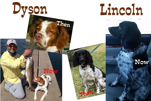 Dyson_Lincoln