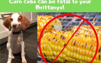 Beware the Danger of Corn on the Cob