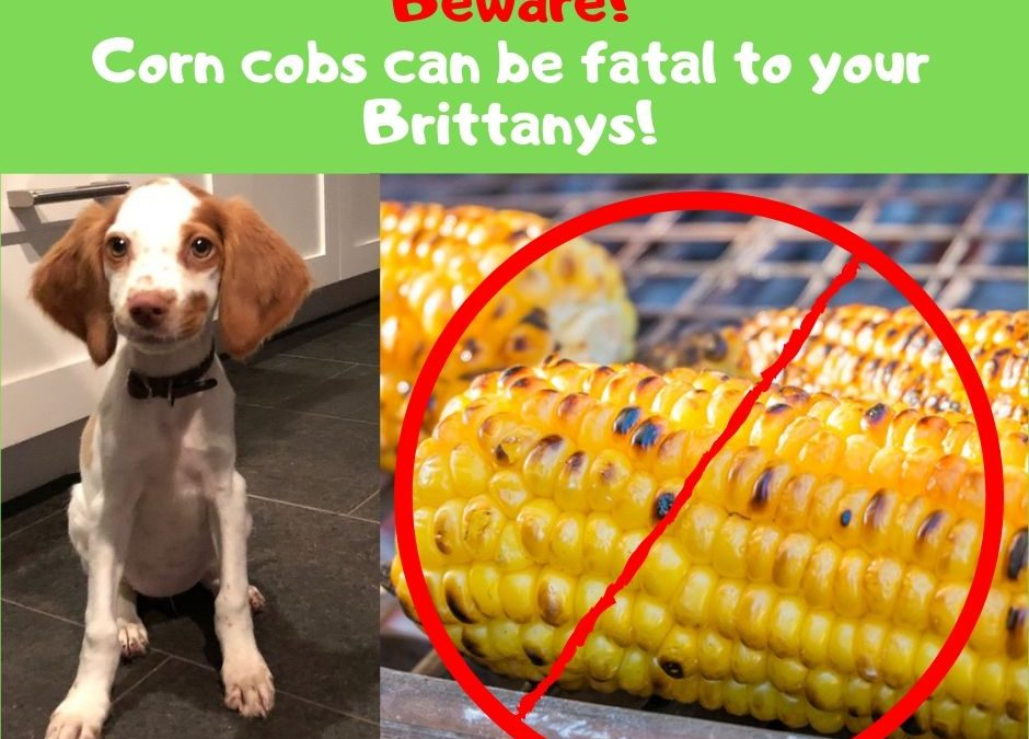 Beware the Danger of Corn on the Cob