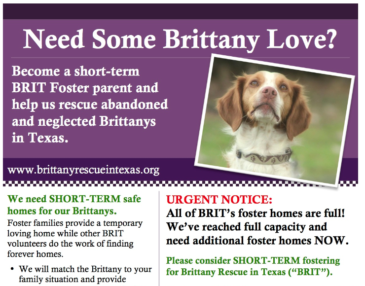 Foster Homes Needed ASAP