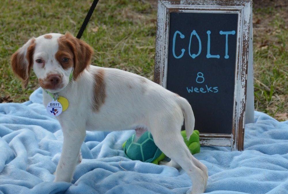 Colt (Puppy)