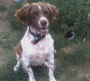 Freddie dogs for adoption 1