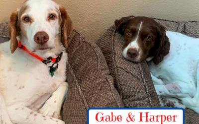 Gabe and Harper