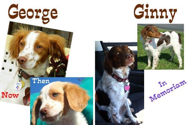 George_Ginny