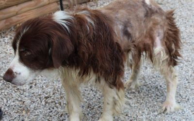 HELP SAVE Jenny, a neglected senior Brittany