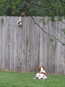 Kara and the squirrel on the fence 4-27-12