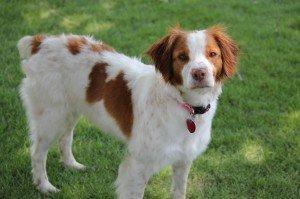 Maggie adoption dog 1