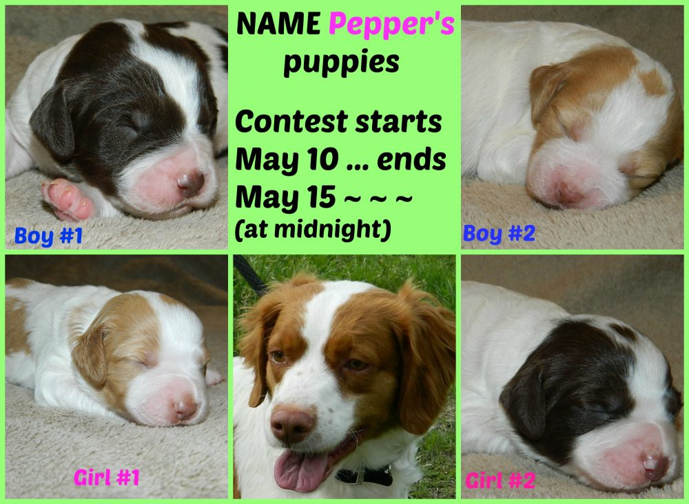 Pepper-puppies-collage