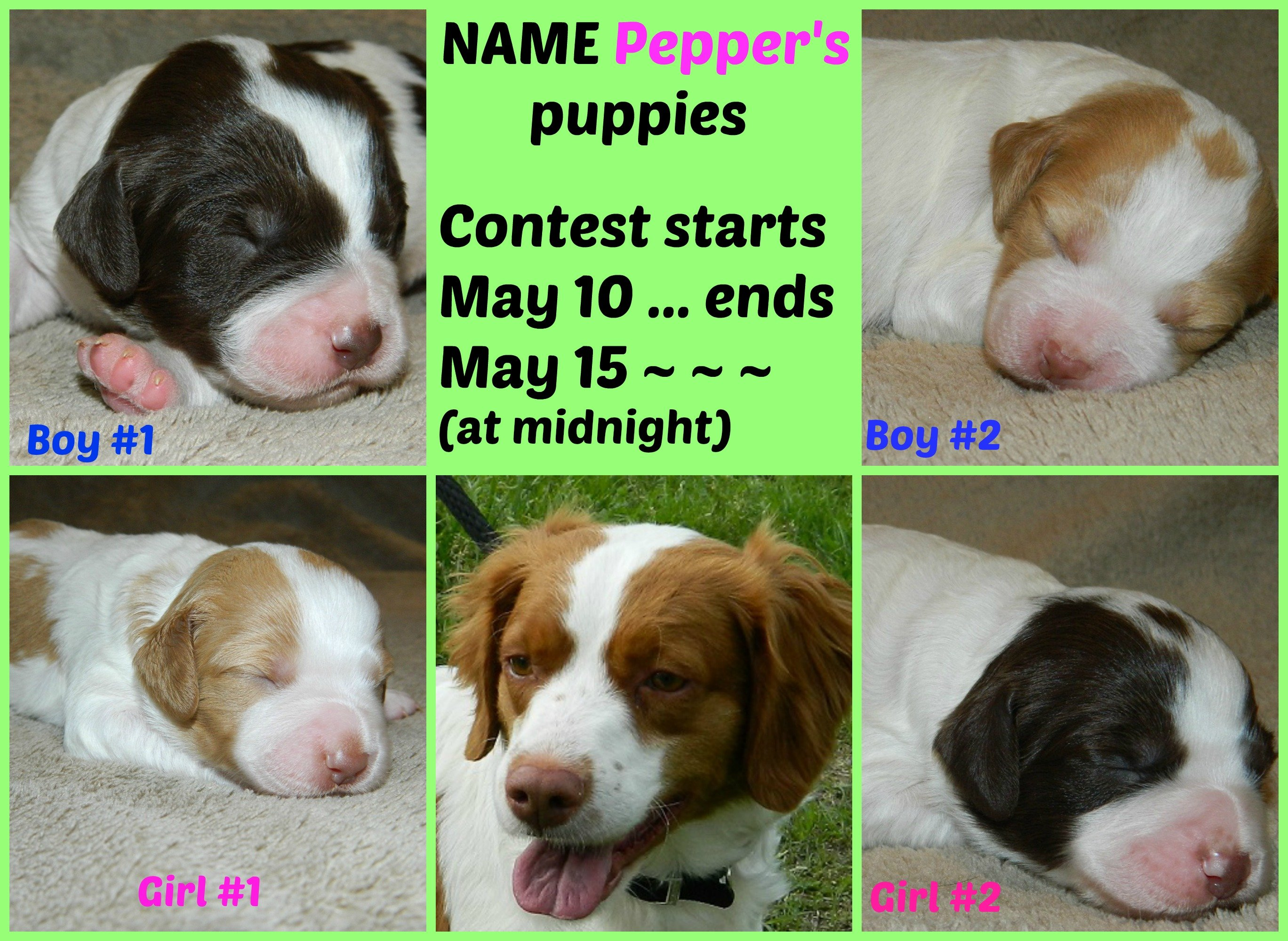 Name Pepper's Puppies