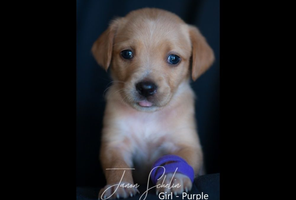 Puppy, Girl, Purple collar   TIGGER