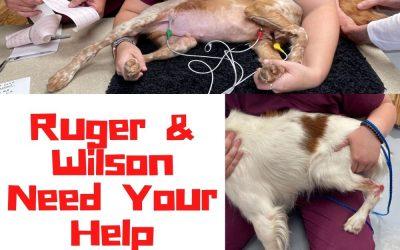 Emergency Needs: Ruger & Wilson