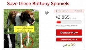 Save_Brittanys