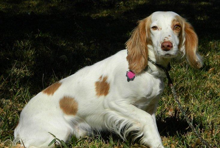 TEXAS_Dog_Rescue_Duncan_2