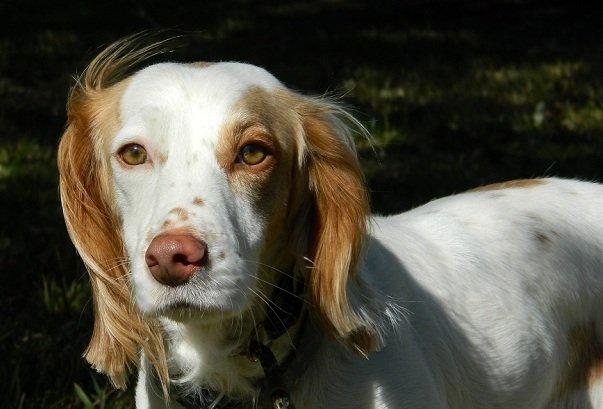 TEXAS_Dog_Rescue_Duncan_3