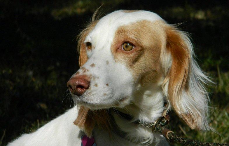 TEXAS_Dog_Rescue_Duncan_4