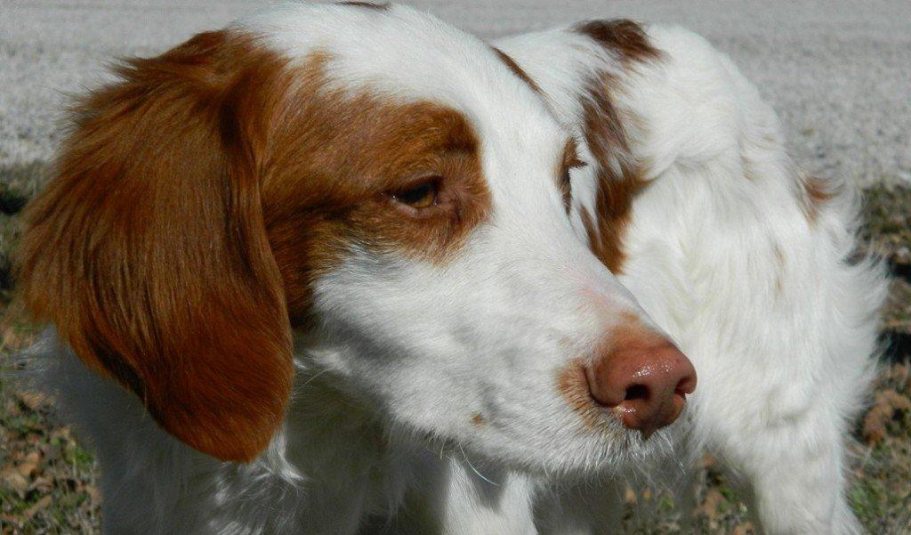TEXAS_Dog_Rescue_Justin_2