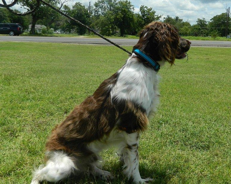 TX_Dog_rescue_Levi_3